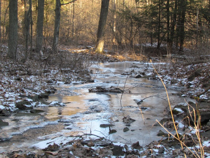creek-light-in-february