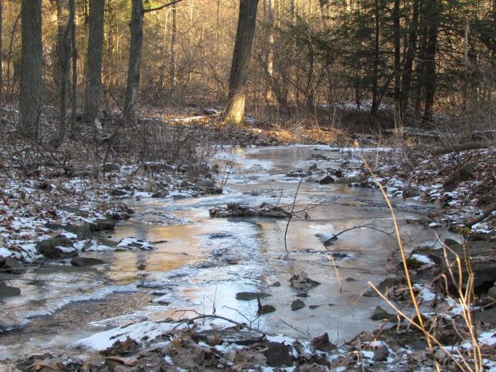 creek-light-in-february
